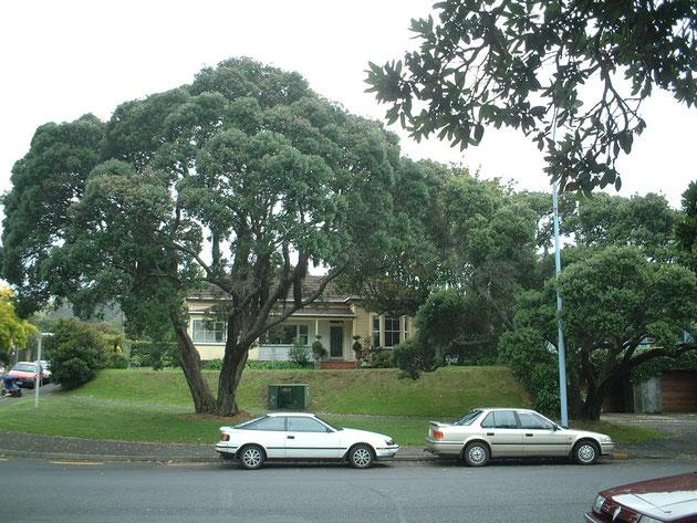 大きな木が印象的 大きな木一つで外構もしっかり絵になる