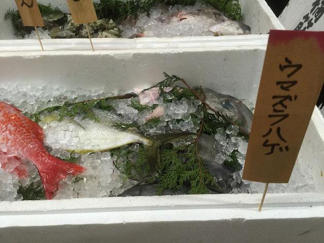 こちらは居酒屋さんの前に置いてあった鮮魚。ウマズラハゲ?