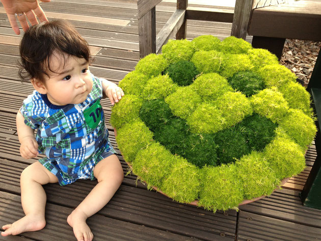 思わずJrと一緒に写真を撮ってしまった!こういう鉢植えがあってもかわいいですよね!