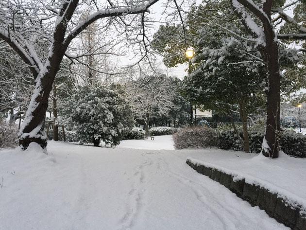 公園も凄い雪です!楽しかったあ!