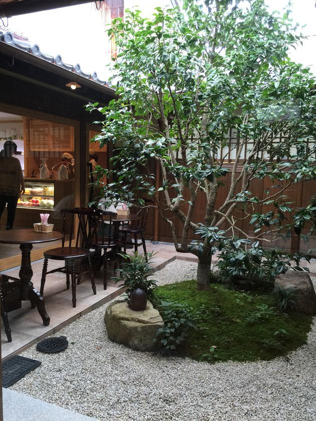 中庭に植えられたツバキ。『いいねえ』とうなってしまう素敵な空間。