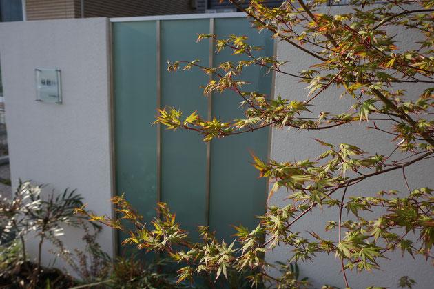 門塀の前には季節を感じられる様にイロハモミジを。