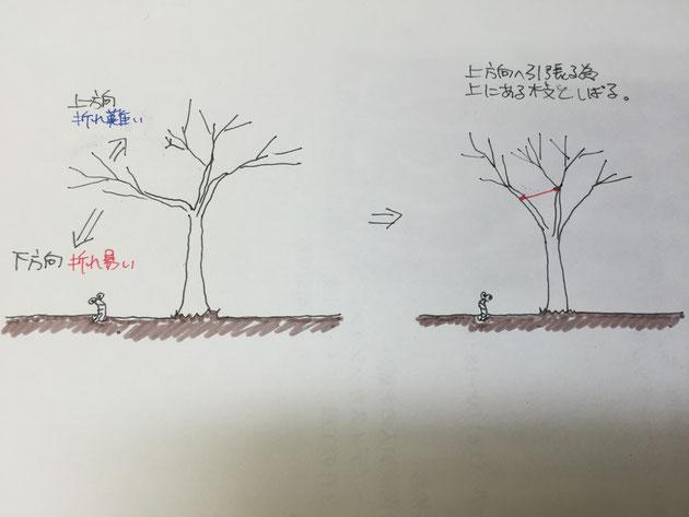 「枝しおり」は運搬のときなどに、枝が暴れるのを防ぎ、強度を高める。