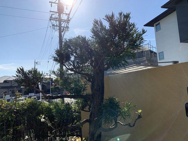 お家の中から見るともっと自然な樹形です