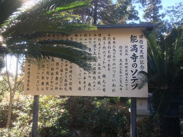能満寺のソテツにはすごい伝説があった!!