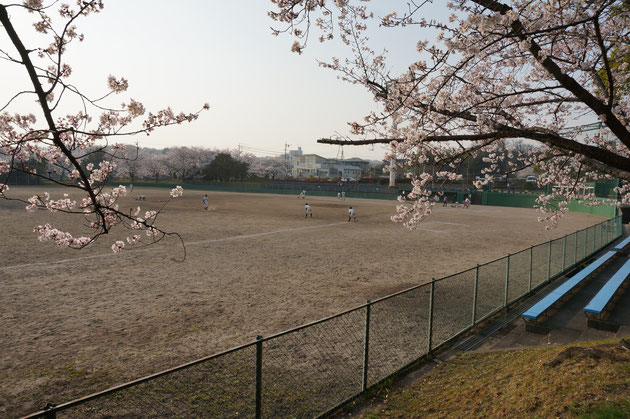 何かこちらの野球場も素敵だったのでパチリ 球児達が練習している 青春だ!