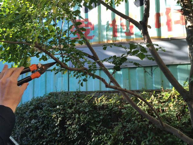 まずはこの枝のこの辺りに紐をくくります。