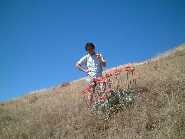 クライストチャーチの空はものすごく青い 見た事の無い多肉植物と写真を撮る柴垣