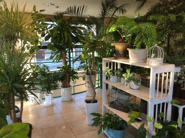 管理の手間が少ない観葉植物も沢山あります