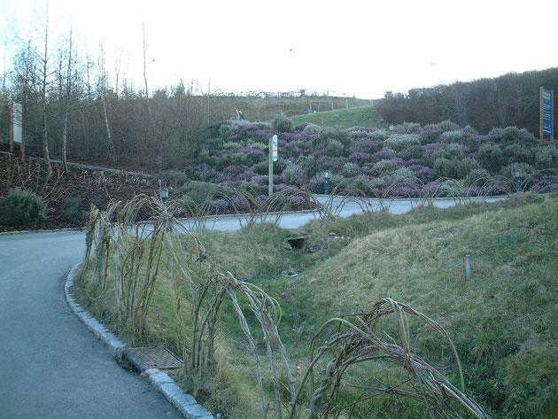 外には英国ならではのヒースの丘が!もう少し暖かくなると更に綺麗です。