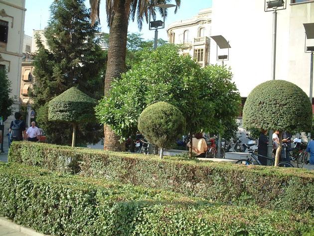 市内の生け垣もトピアリーになっていた ロリポップの様でおもしろい