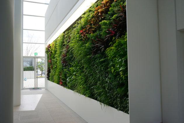 素敵な壁面緑化だなあ。