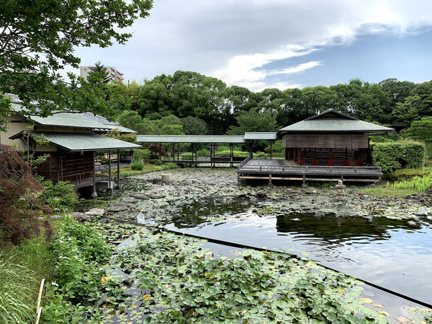 名古屋市の名庭「白鳥庭園」に行ってきました!