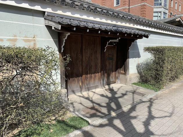 京都で見つけた今時珍しいカラタチの生垣。