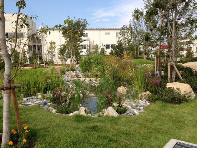 エコフルタウンの敷地内には池がある 多分ビオトープ