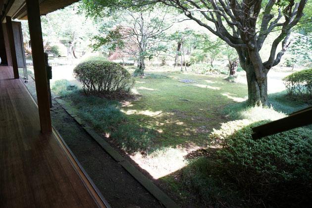 好文亭に入ると縁側から庭を見る事が出来る。これこそ日本の庭だと感じる。