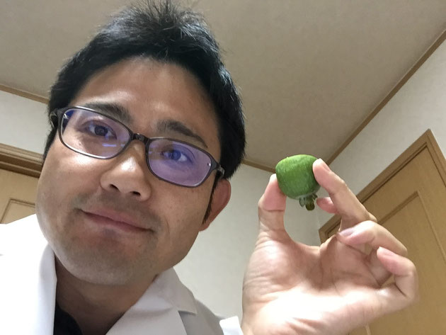 ガーデンドクター柴ちゃん最もおすすめのフェイジョアを食す!!!
