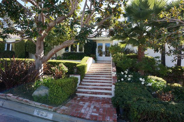 高木は余り手を入れない?カリフォルニアの高木は自然な形で伸びて行ってるイメージ。