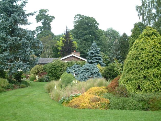 芝生の美しい庭 芝生のグリーンがしっかりしているためカラーリーフも際立つ