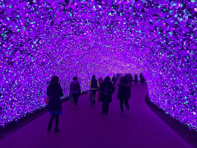 なばなの里にあったラベンダーのような色のトンネル!