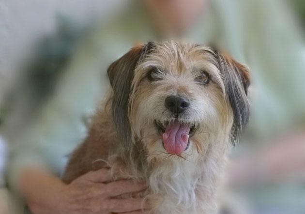 Hund im Arm von Seniorin