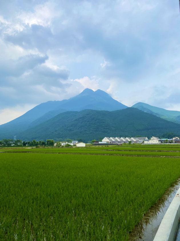 大分県産ローカルタレントが由布市の由布岳を見る