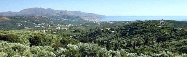 美味しいオリーブオイルとバルサミコビネガーのふるさと『クレタ島ハニア県コリンバリ地方』の風景