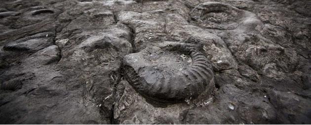 Fossiles d'ammonites (anciens animaux marins) observables dans des montagnes.