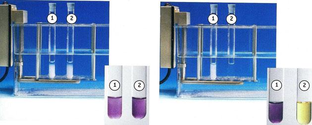 Tubes A et B au début (à gauche) et à la fin de l'expérience (à droite). Cliquer pour agrandir.