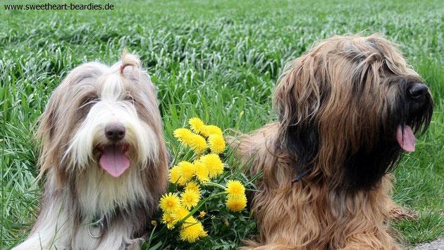 Zwei dicke Freundinnen :-)