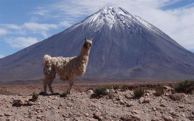 das apfelrudi-special-Bild: er hat uns die lamas bestellt, direkt neben die Straße
