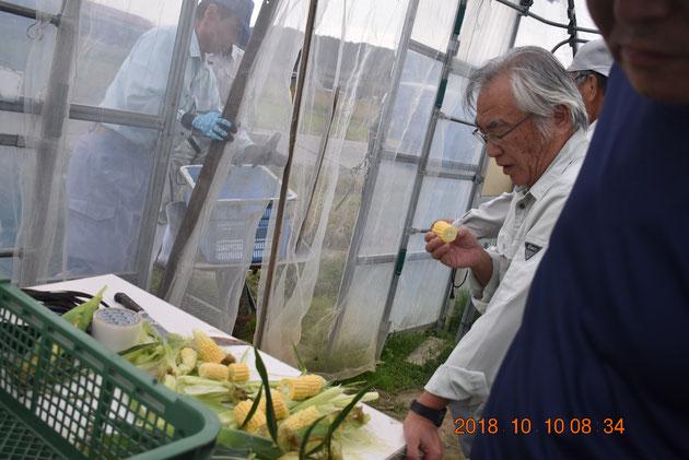 収穫したばかりのトウモロコシを試食する石野喜久雄グループ長さん