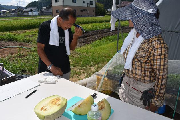 メロンの甘さを測定するため糖度計を覗き込む小田桐先生。会員は固唾を呑んで、発表を待っています。