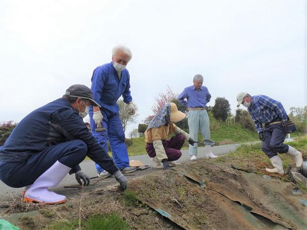 花泉 大森集落(永井) 防除シートの釘止め作業の様子