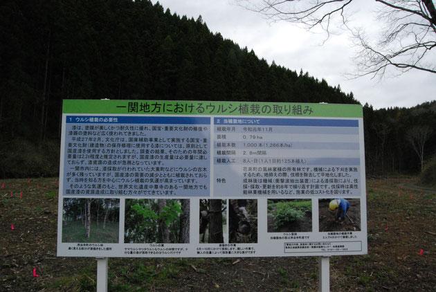 一関地方におけるウルシ植栽の取組み