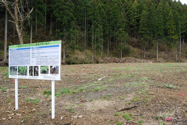 千葉日出雄さんが2019年より栽培を始めた漆畑