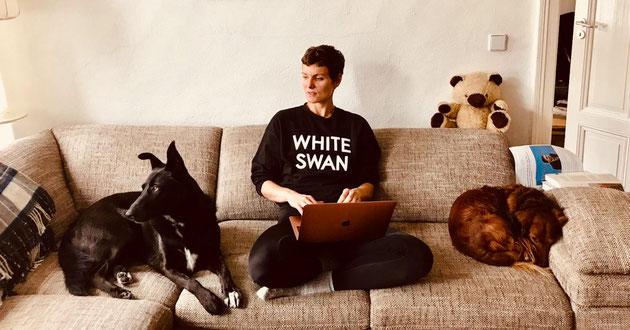Zwei Hunde und Mensch auf Couch