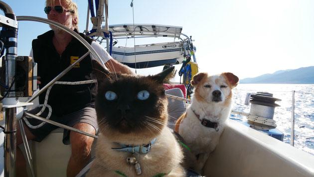 Hund und Katze mit Segler auf Boot