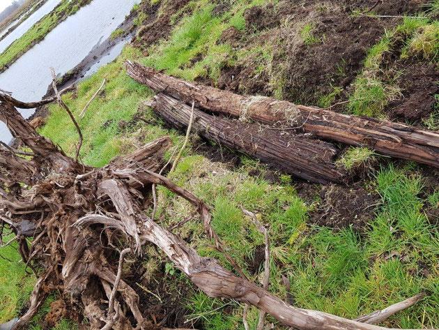 Kaputter Baum liegt im Moor