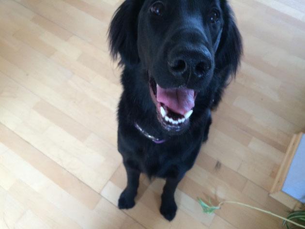 Bailey ist zu Besuch 💕☀️
