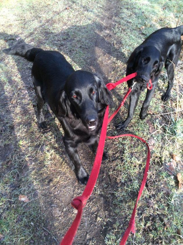 Mit Mama spazieren gehen💕☀️links Duma, rechts Bailey