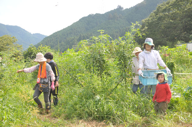 農業体験 家族連れ 首都圏 さとやま農学校 自然栽培