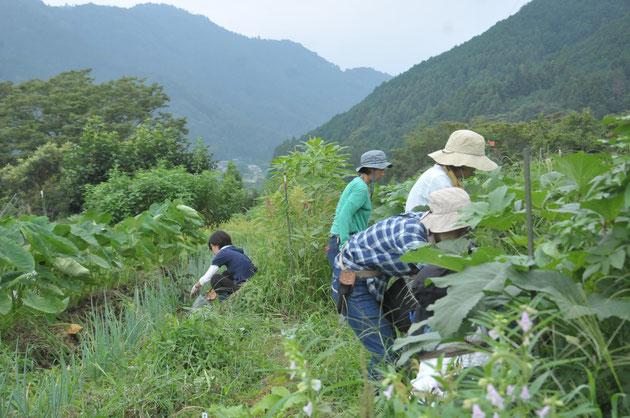 自然栽培 農業体験 体験農場 固定種