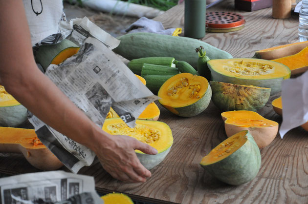 固定種 自然栽培 在来種 カボチャ 野菜作り教室 農業体験