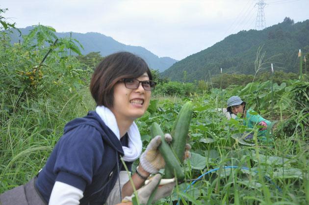 地這いキュウリ 自然栽培 体験農場 農業体験 野菜作り教室