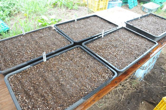 固定種 在来種 種取り 自然栽培 すどう農園 さとやま農学校