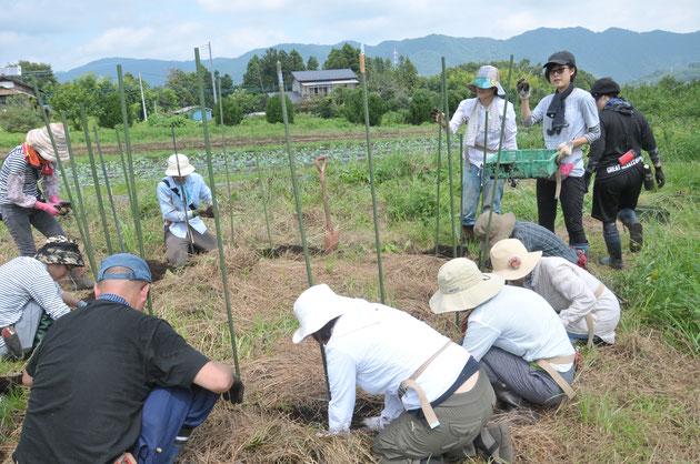 ジャガイモ 自然栽培 農業体験