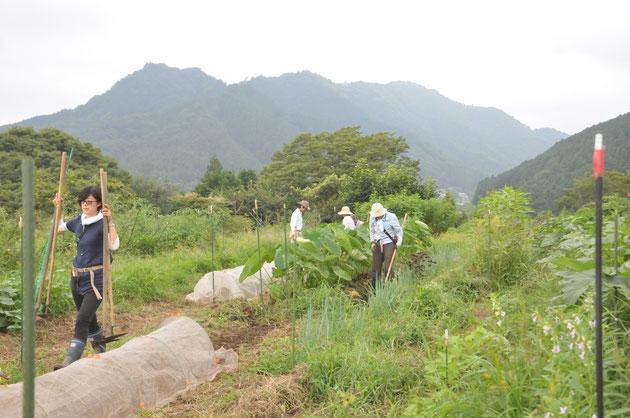 固定種 種まき 体験農場 農業体験 野菜作り教室 自然栽培