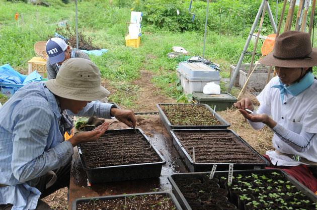いろいろな品種と、まき方もいろいろ。まずは皆さんと試していきます。種取りした固定種の野菜もかなりの品種になりました。