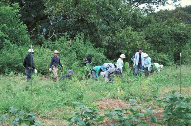 農業体験 体験農場 自然栽培 固定種 無農薬栽培